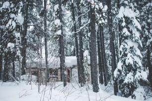 our backyard little cabin