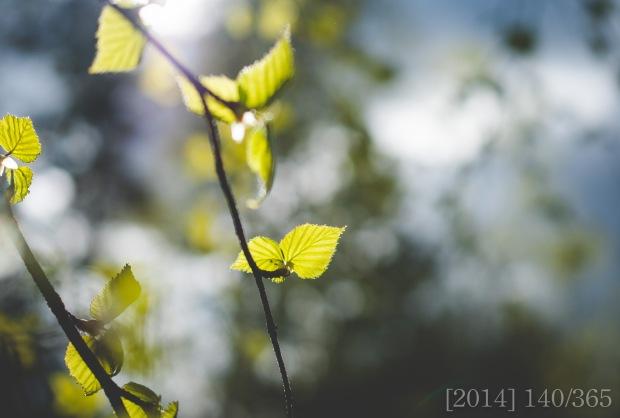 Nikon D300s || 40mm || ISO 320 || f 3