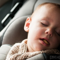 poor little guy fell asleep with a cookie in his mouth.