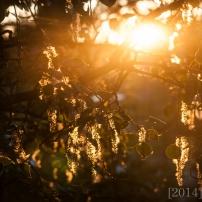 Cool light shining through the fuzzies around 10pm (85mm)