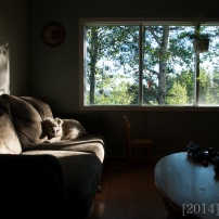 """This one was taken with the Tamron lens. One thing I missed about not having a wide angle was capturing whole rooms in our house. I love that this one can """"see"""" so much of my surroundings."""