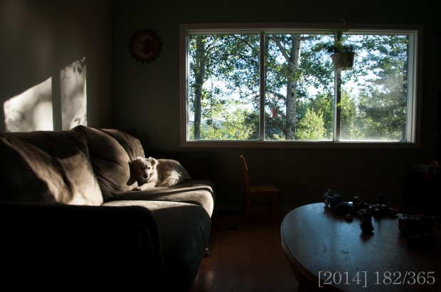 "This one was taken with the Tamron lens.  One thing I missed about not having a wide angle was capturing whole rooms in our house.  I love that this one can ""see"" so much of my surroundings."
