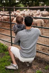 At Lori's parents' farm.