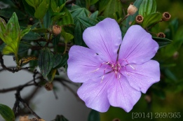 This single flower has bloomed on a tree in the front yard