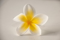 "I know these flowers as ""frangipani"", but here they are called ""jasmine"""