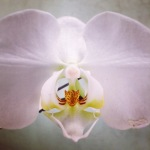 O is for Orchid