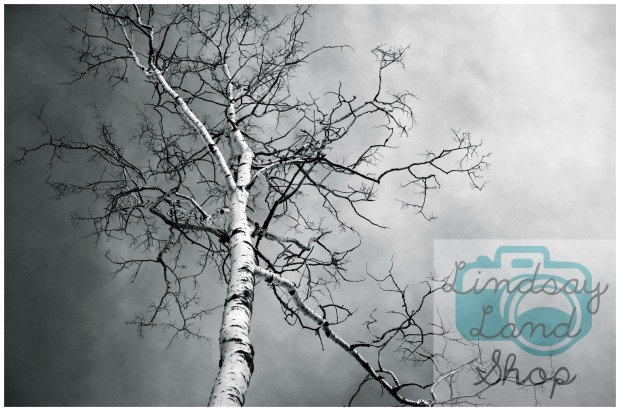 dramatic-tree-overlay-shop